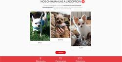 Site Association Chihuahua en détresse