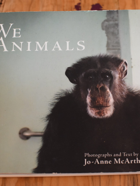 Casa Animal | 6
