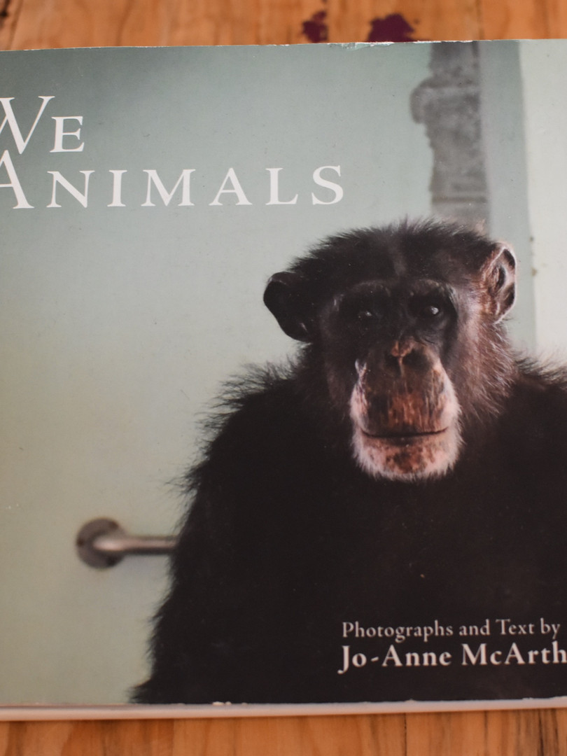 Casa Animal   6