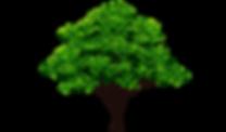 elm-tree.png