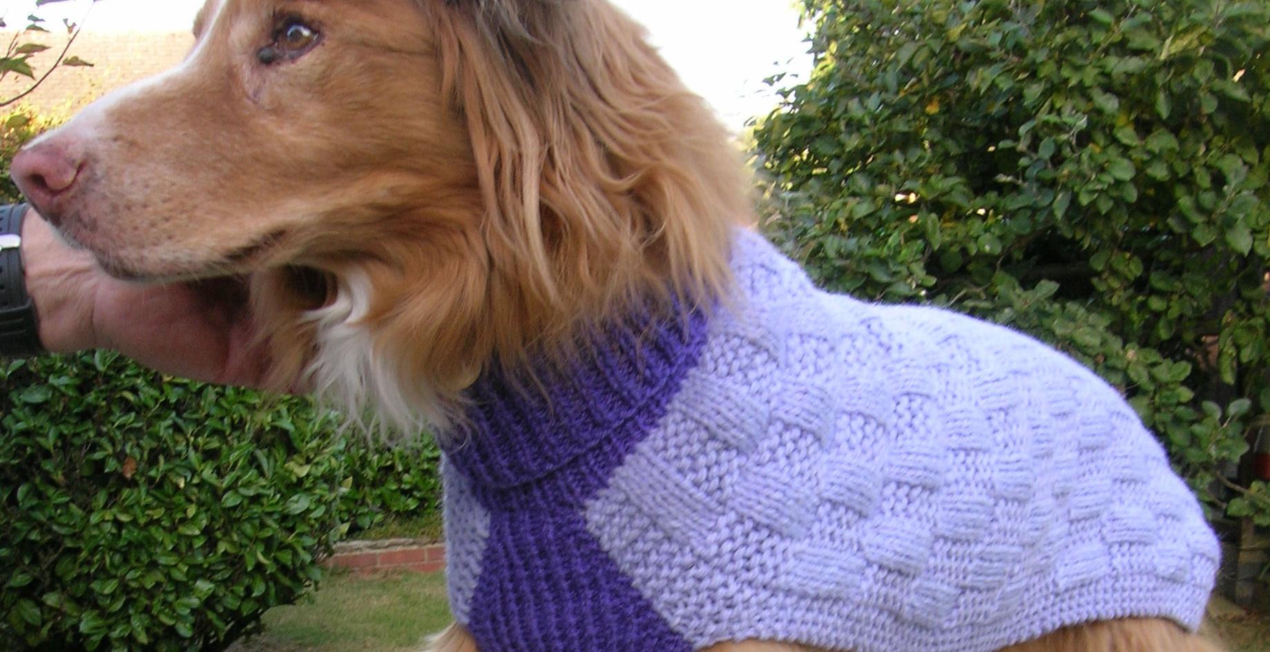 dog coat 593 on Toffee
