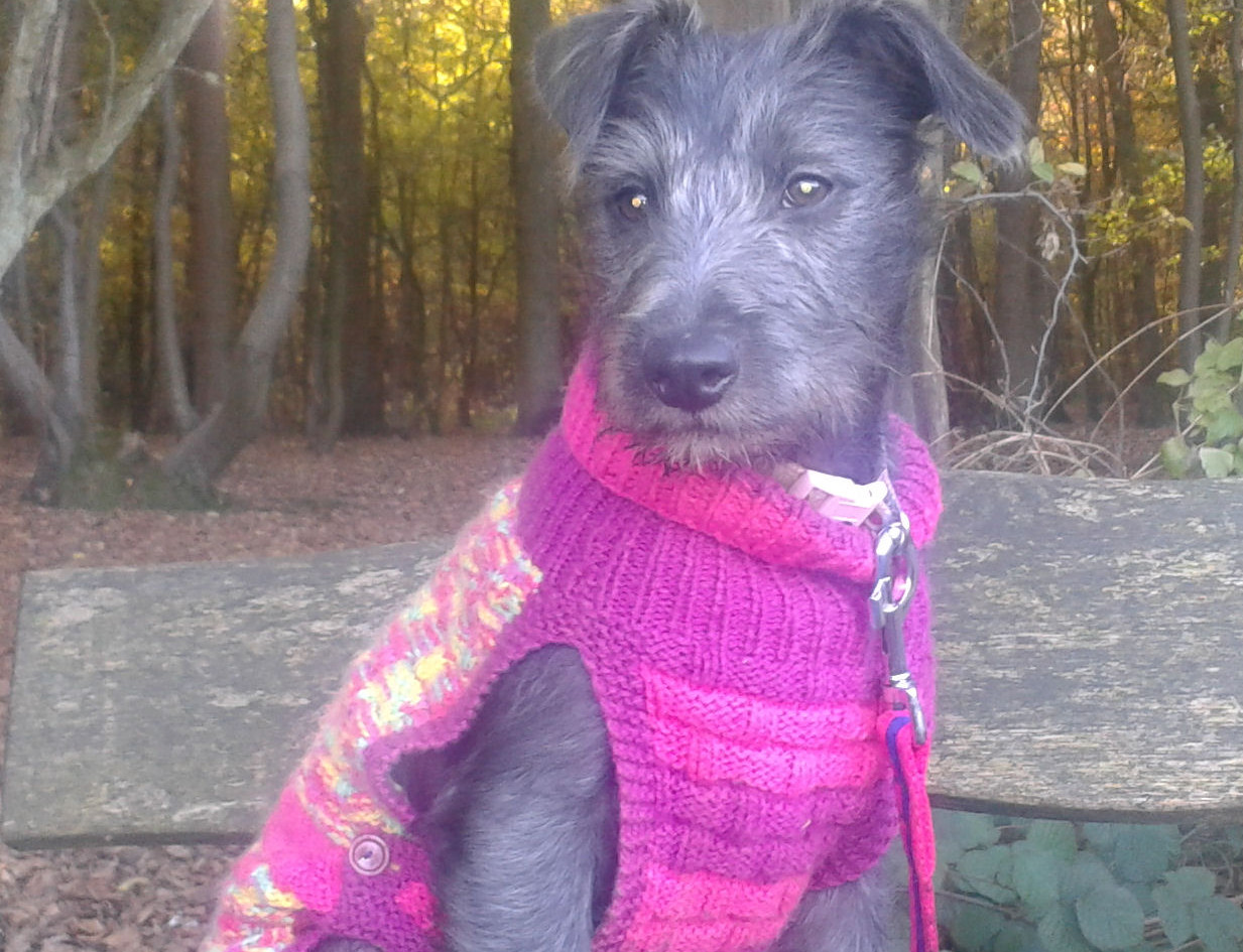 dog coat 386 on young Mabel