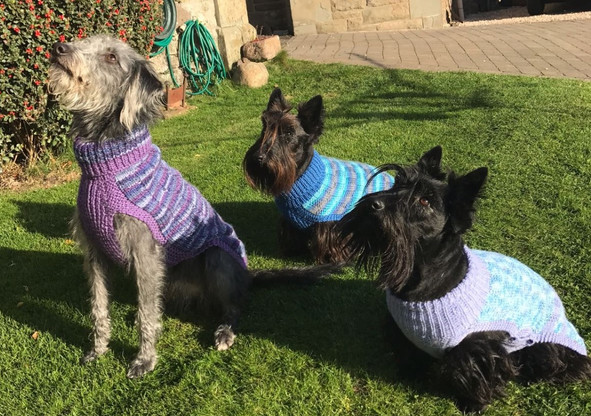 Luna and friends in Dundee, coats 465,557 & 627