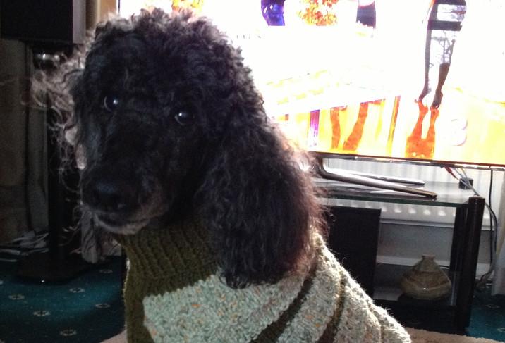 coat 258 on Darcy