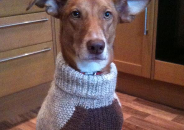 dog coat 383 on Sid