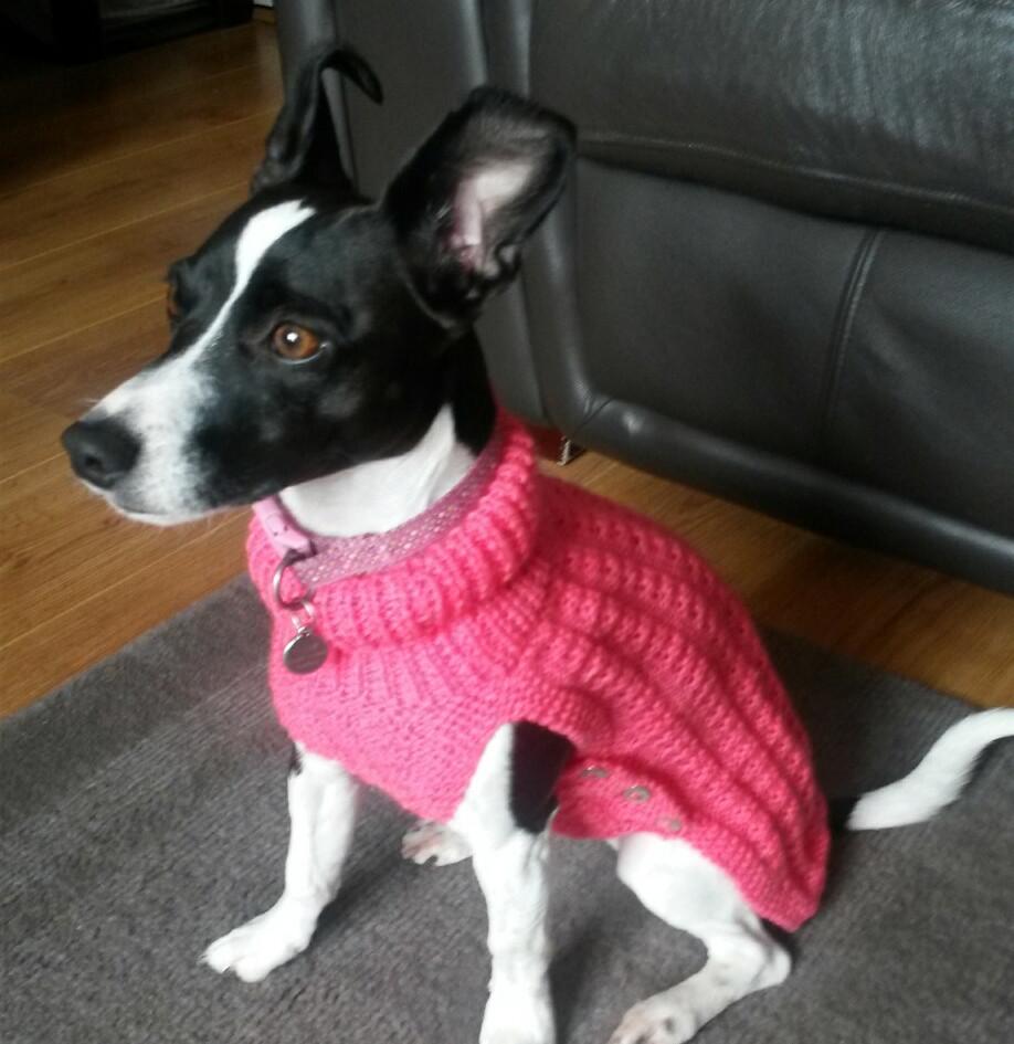 dog coat 544 on Penny