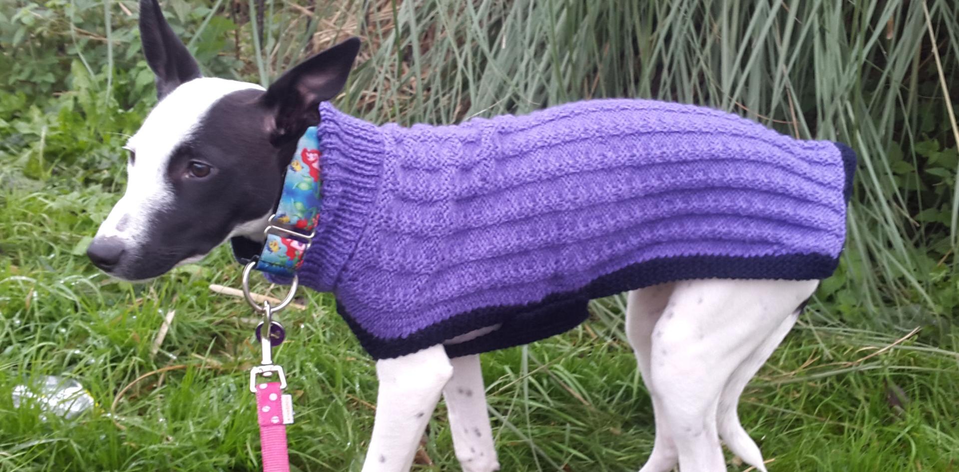 dog coat 601 on Twiglet