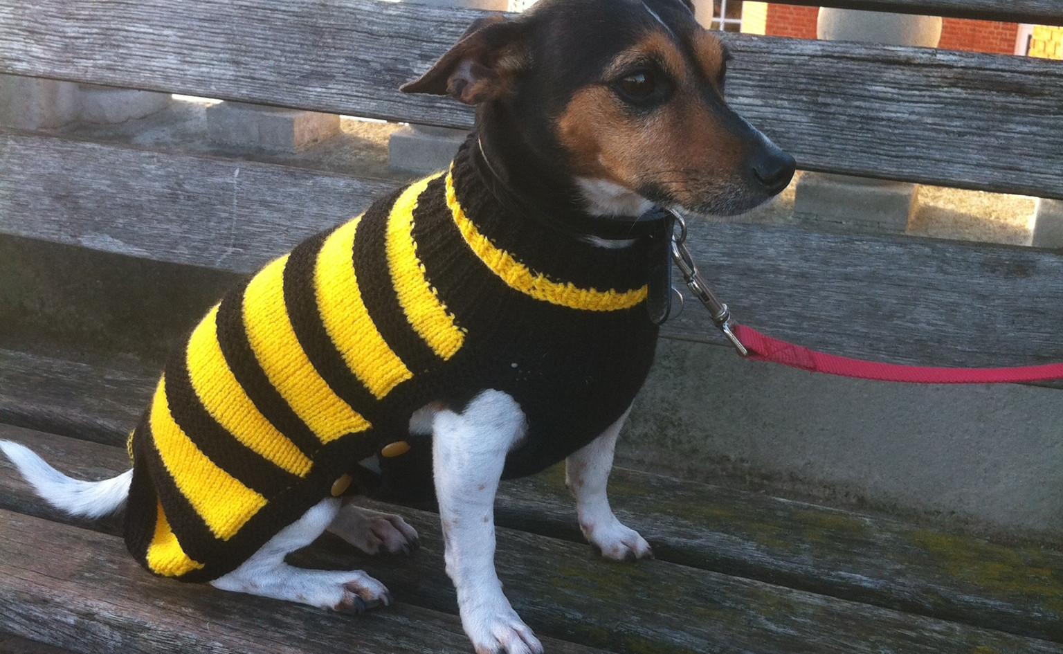 dog coat 533 on Georgina