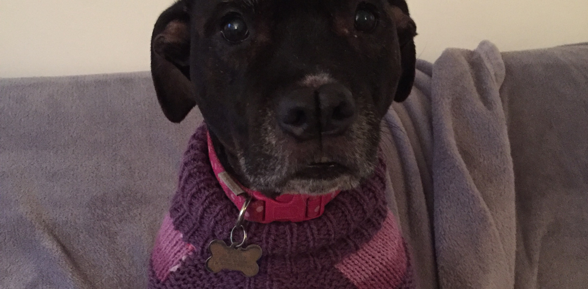 coat 484 on Mabel