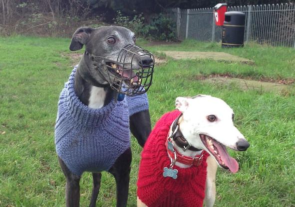 dog coat 530 and 531 on Ziggy and Hector