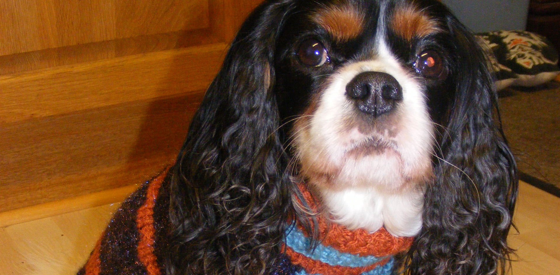 coat 538 on Maisie