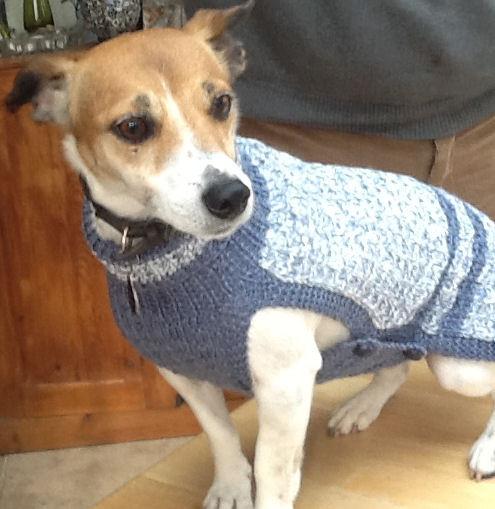 dog coat 430 on Molly