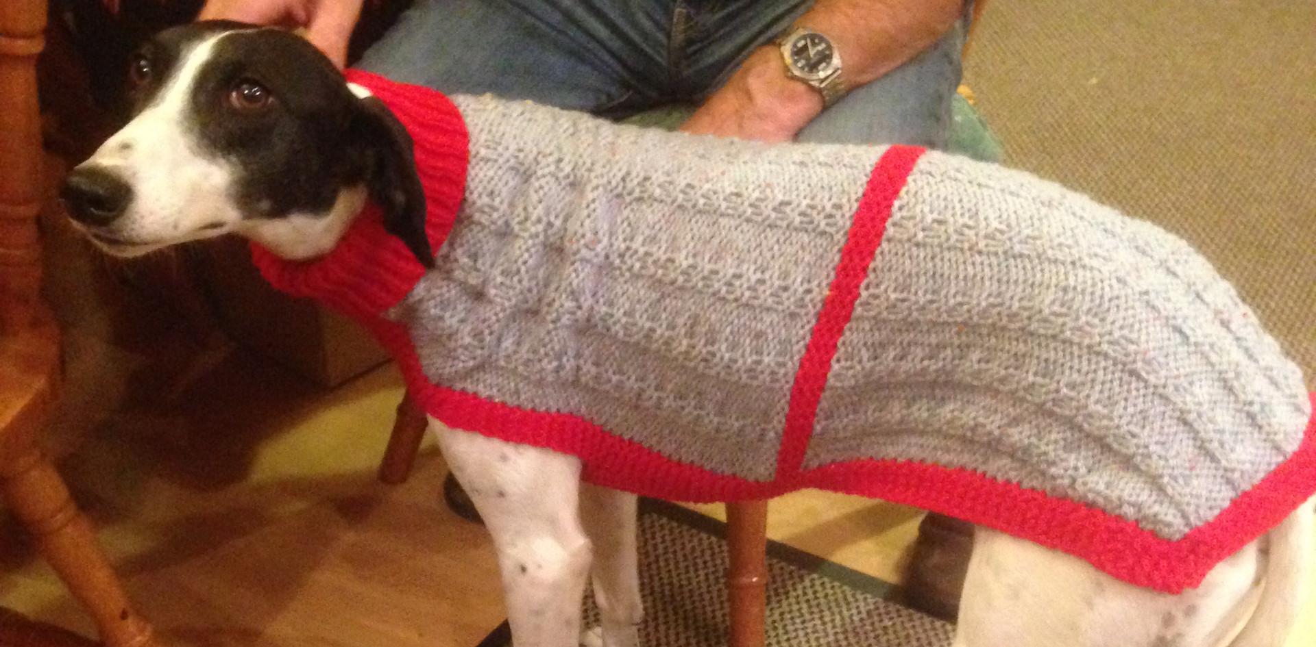 dog coat 592 on Sassie