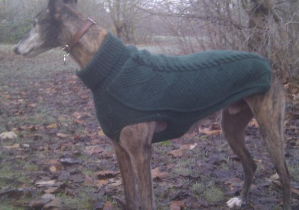 dog coat 308 on Moose