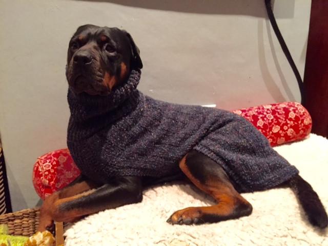 dog coat 528 on Blaze