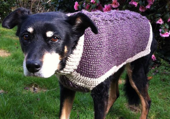 dog coat 249 on Megan