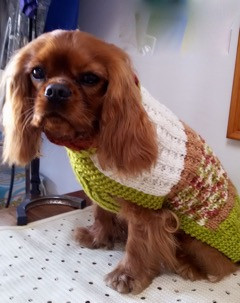 coat 492 0n Lucy