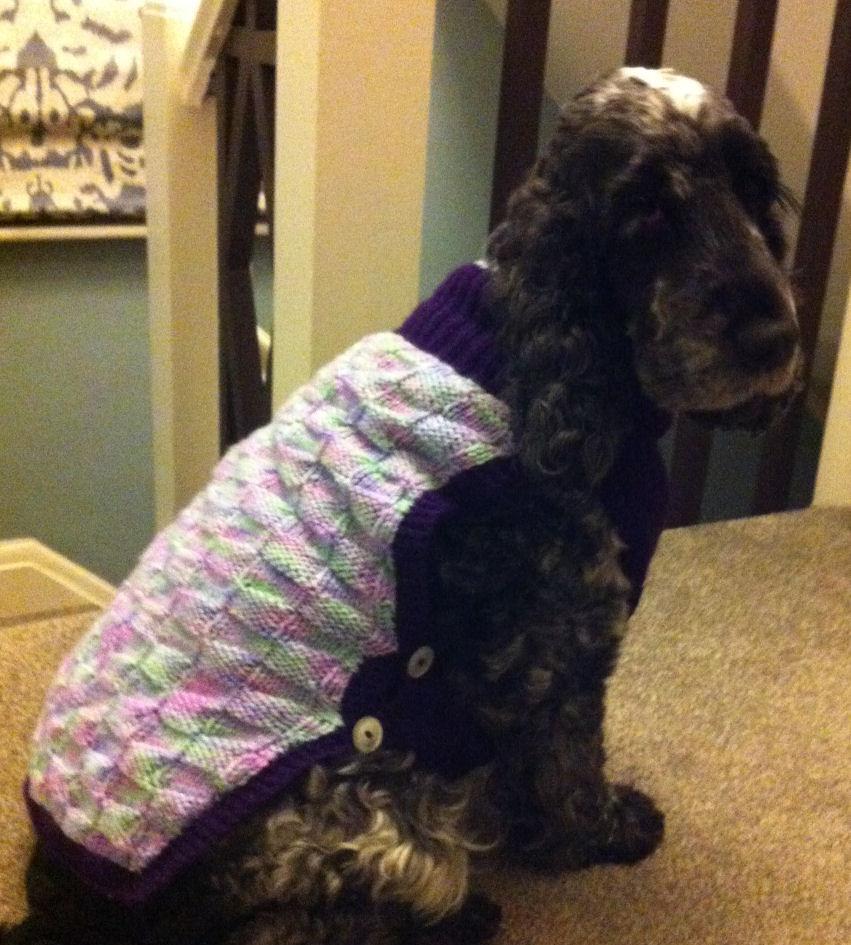 dog coat 208 on Millie