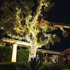 Commercial Holiday Light Installation