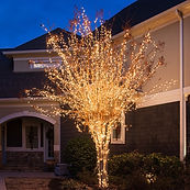 Mini-Lights-Crepe-Myrtle-Tree-Wrap-0343.