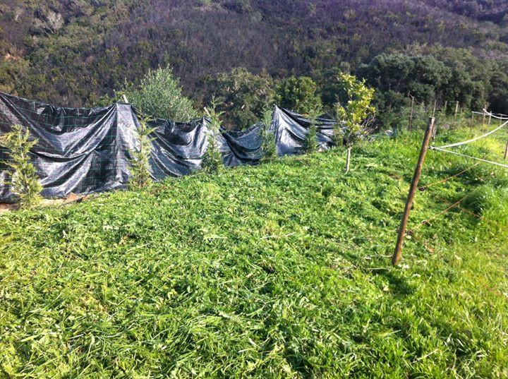 Facebook - After cutting the grassand weeds