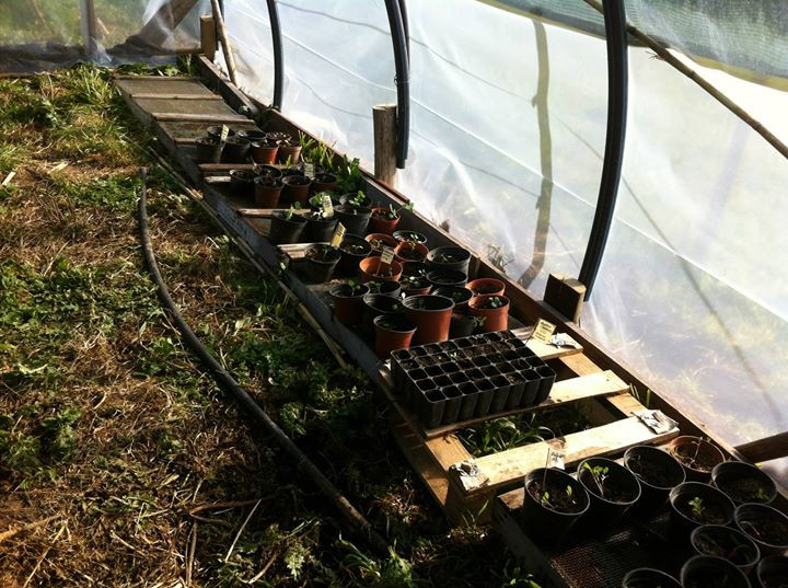 Facebook - Here we start to add th plants and seedlings.jpg Hopefully the will b