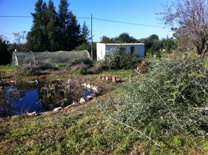 Facebook - Using brush material that had blown down ina recent storm and pruning