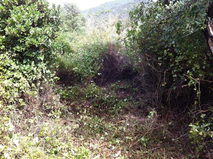 Facebook - Clearing brambles