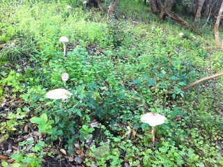 Wild Mushrooms in Portugal