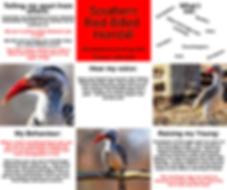 Fact Sheet - Red-Billed Hornbill.png