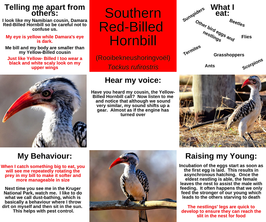 Fact Sheet - Red-Billed Hornbill.png