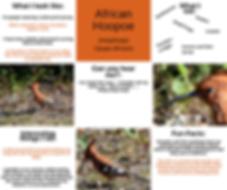 Fact Sheet - African Hoopoe.png