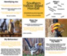 Fact Sheet - Yellow- Billed Hornbill.png