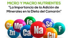 MICRO Y MACRO NUTRIENTES: La Importancia de la Adición de Minerales en la Dieta del Camarón