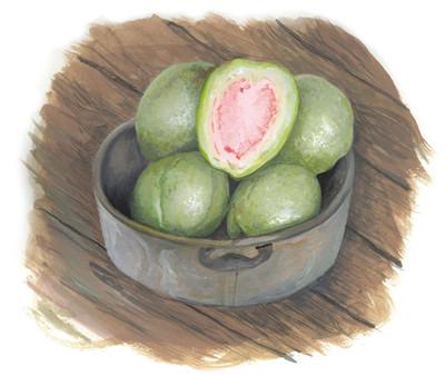 Pink Guava 2019