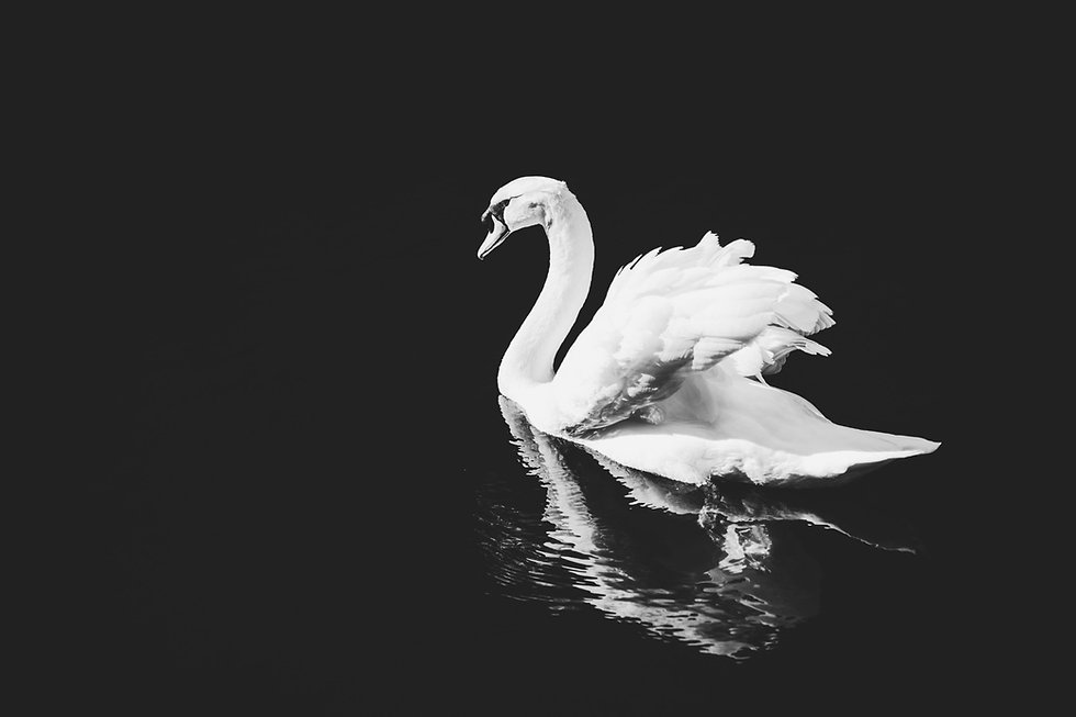 Swan PA Virtual Assistant backdrop