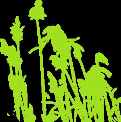Conservation Grasses