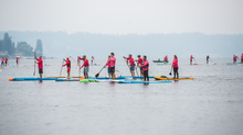A Sea of Pink on Lake Sammamish