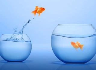 Selection Dilemma: Large vs Mid vs Small