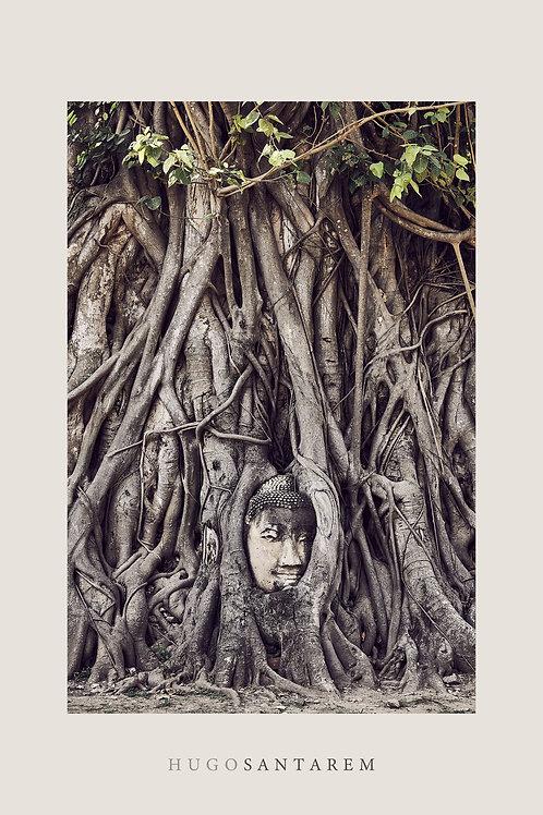 Poster. Buda. Tailândia.