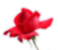 imageedit_3_4777855593_edited.png