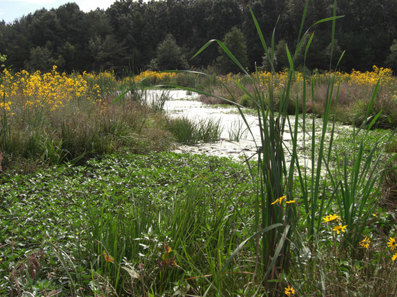BARC Wetland and Stream Restoration Project