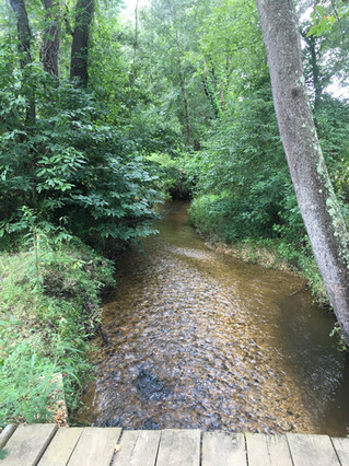 Mattawoman Creek Mitigation Site