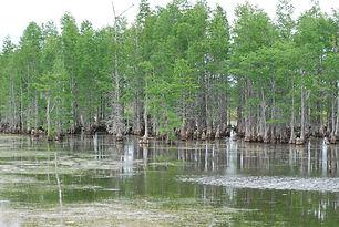 Flat Swamp- Site Photo.jpg
