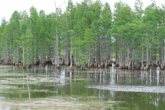 Flat Swamp Mitigation Bank