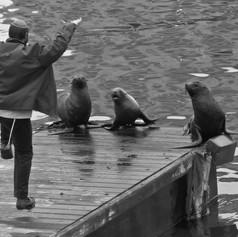 Dockside Ritual