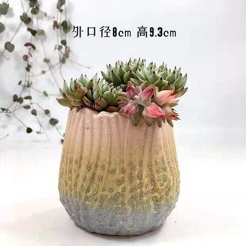 Solid Succulent Flower Pots Vase Matt Pink Blue