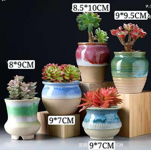 Selection of 5 Cactus Succulents Pots Gloss Glaze Ceramic Multi-color