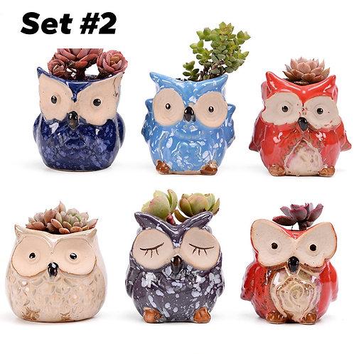 Cute Owls Succulent Pots Selections 6pc #2
