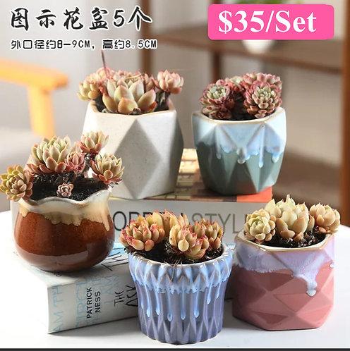 Multi Designs 5 Succulents Ceramic Pots Glossy 9cm